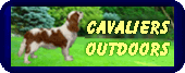 cavaliers outdoors